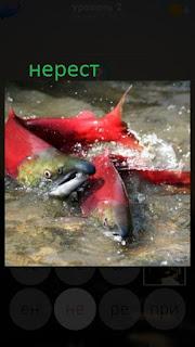 389 фото рыбы собрались на нерест 2 уровень