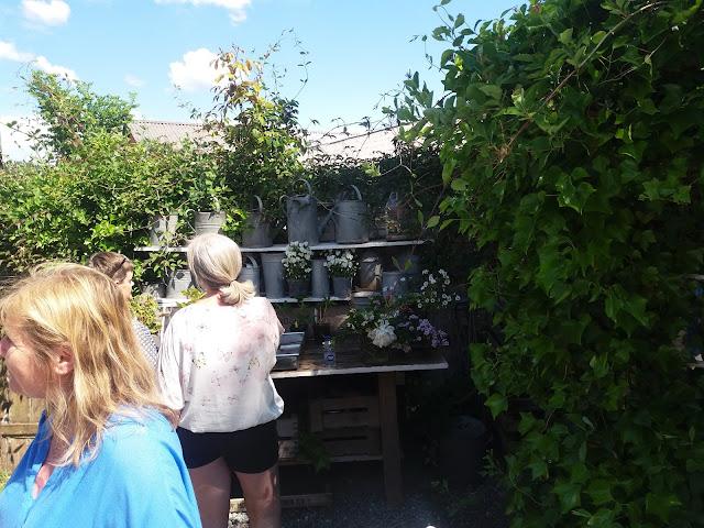 Lad romantikken blomstre: tante grøns have