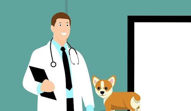 pet health advice  pet health articles healthy pet  health for pets  pet health care & wellness  dog health