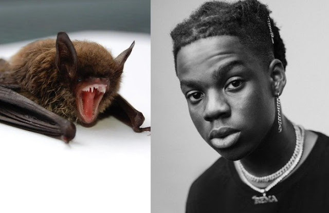 I Would Love To Have A Bat As A Pet_ Rema