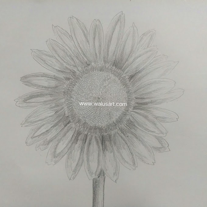 Cara Menggambar Bunga Matahari