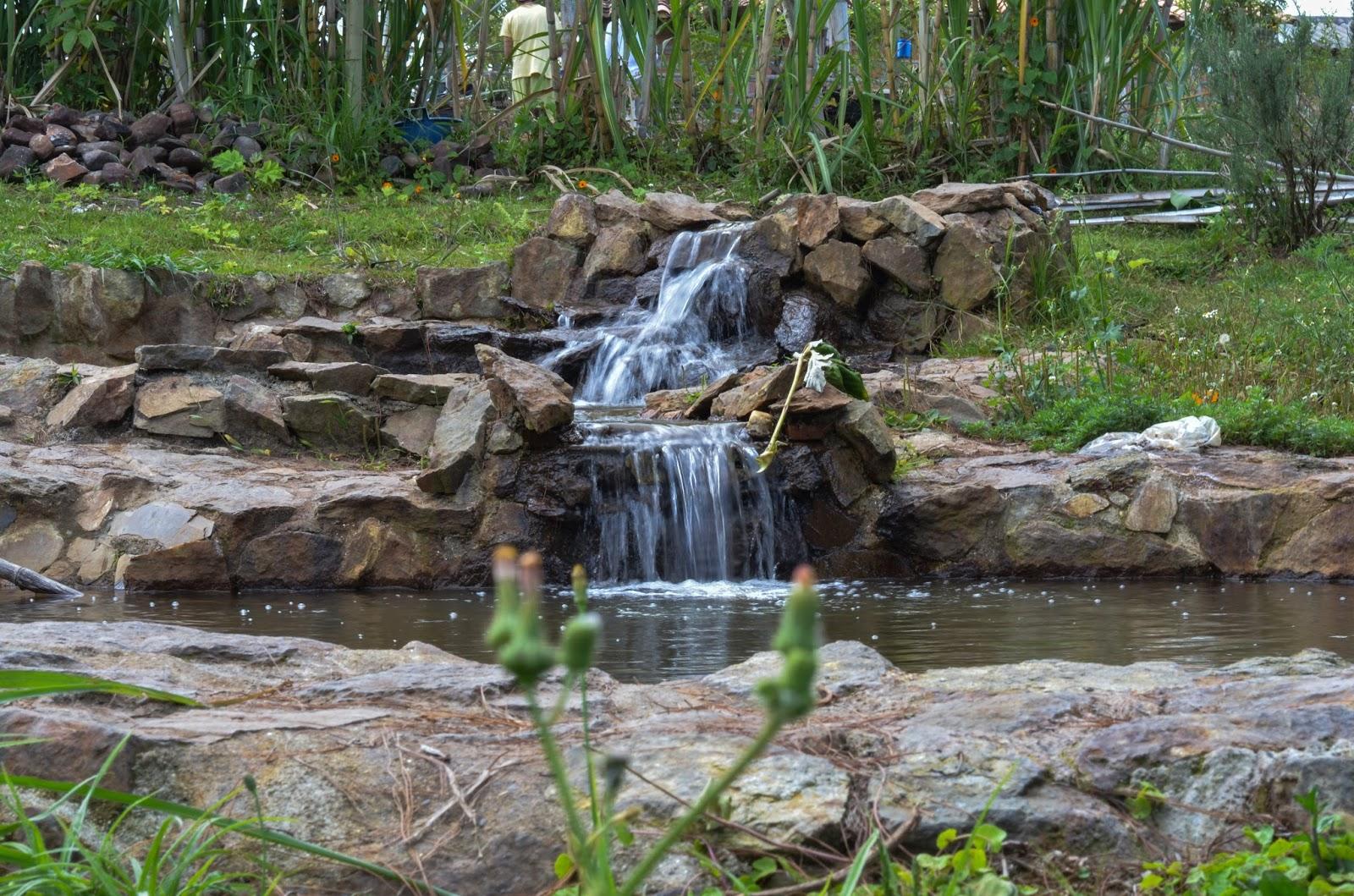 naturaleza, yoga, park,tranquilidad, om, conexión,relajación,compartir,ecología,puro,tierra
