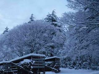 雪囲いにも雪が積もった