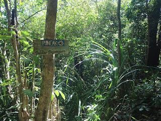Pendakian Gunung Pandan 897 Mdpl Via Tugurejo Bojonegoro