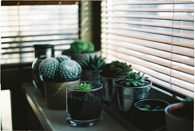 5-habitos-nocturnos-regar-plantas