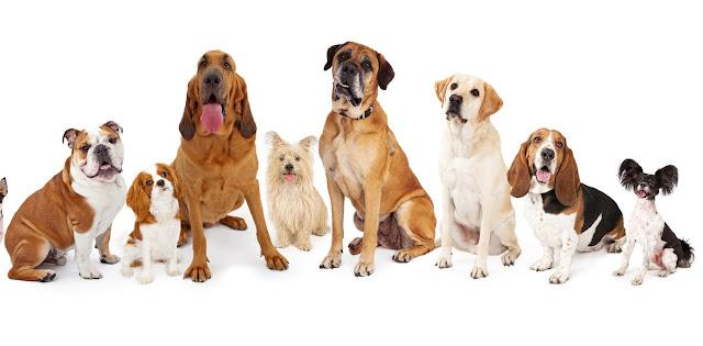 سنتعرف على تفسير رؤية الكلاب في المنام للمتزوجة وتفسير حلم هجوم الكلاب تفسير حلم الكلاب السوداء وتفسير حلم كلبين يلاحقوني رؤية الكلاب الأليفة في المنام وتفسير حلم الكلاب للمطلقه ورؤية الكلاب في المنام والخوف منها