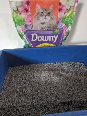 Review Pasir Gumpal Kucing Downy