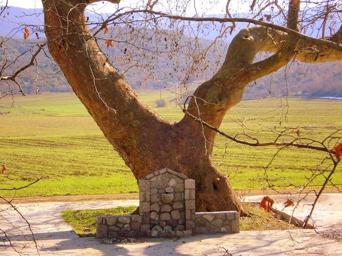 «Υψωμένα Δέντρα»: Πως ξόρκιζαν κάποτε τα κακά και τις επιδημίες