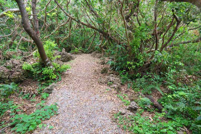 trail, nature, forest, Horohoro, cinnamon, Okinawa