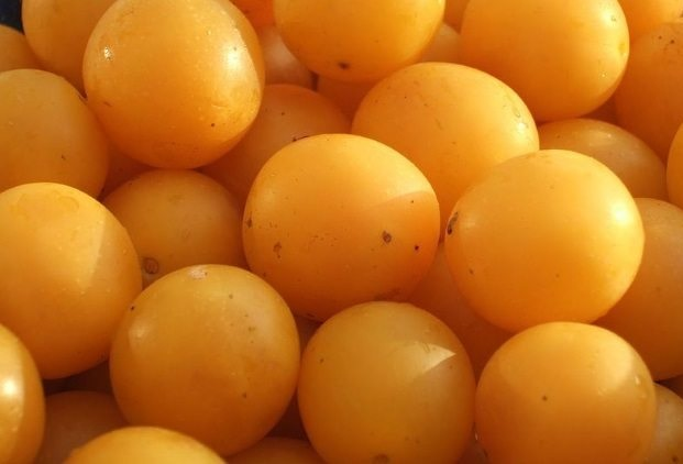 kumbulla e verdhë