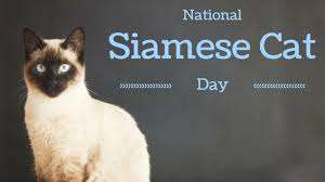 National Siamese Cat Day Wishes Sweet Images