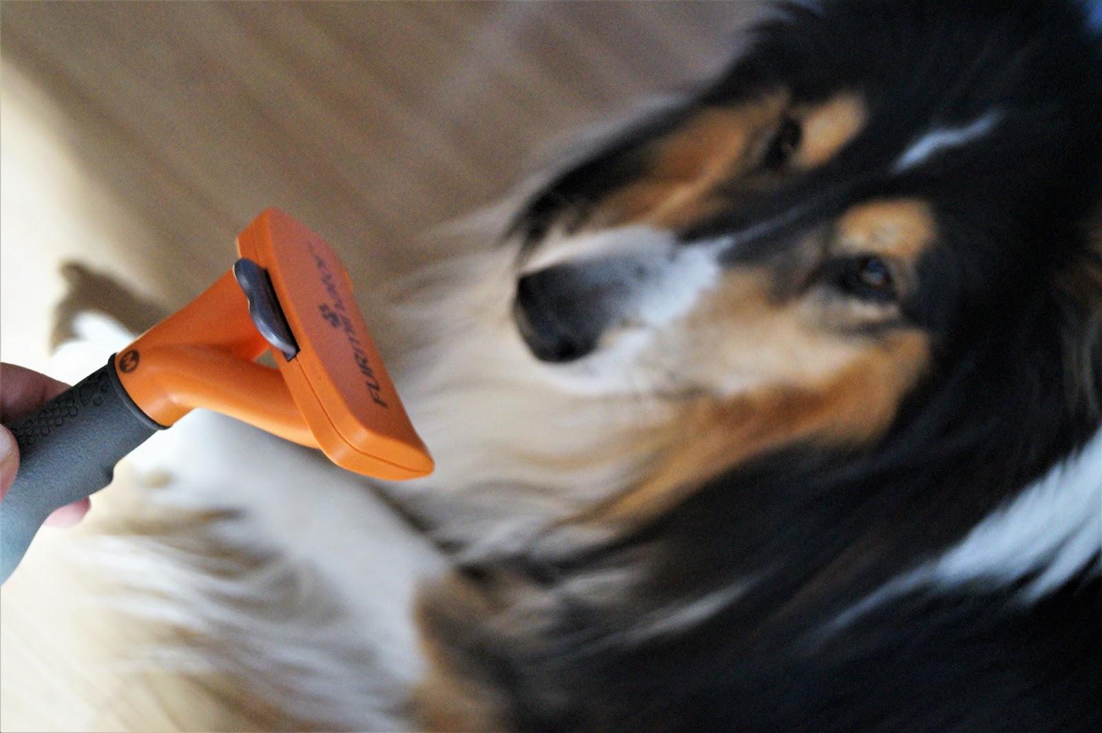 Pies w domu - co z tą sierścią?