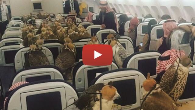 VIDEO: Pangeran Arab Ini Borong 80 Tiket Pesawat Demi Angkut Burung