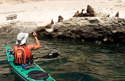 en kayak hasta la lobera de Punta Pirámide