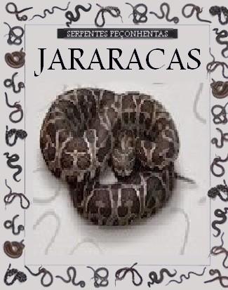 Jararacas-1