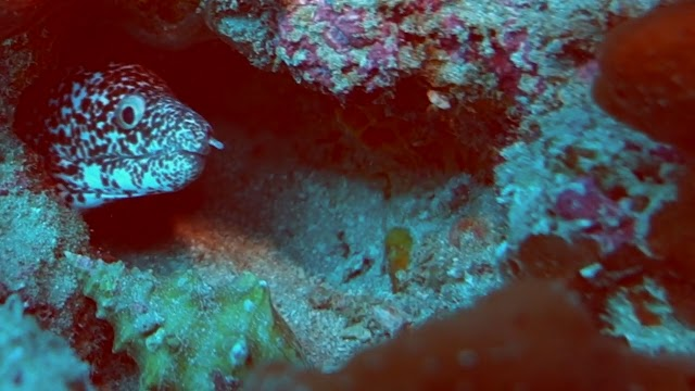Palm Beach County Reefs