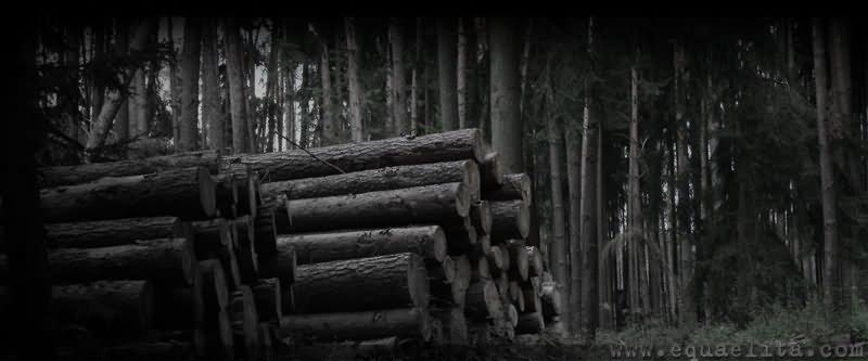 Бревна - остатки деревьев