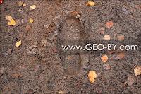 Налибокская пуща. Свежие следы человека на распаханной противопожарной полосе