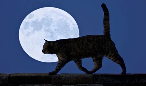 are cats nocturnal