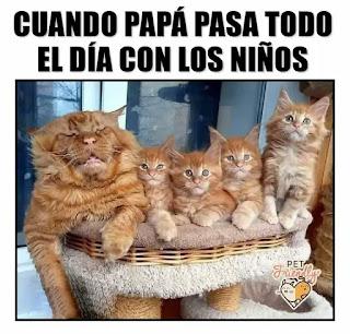 Cuatro gatitos y papá Gato con mala cara