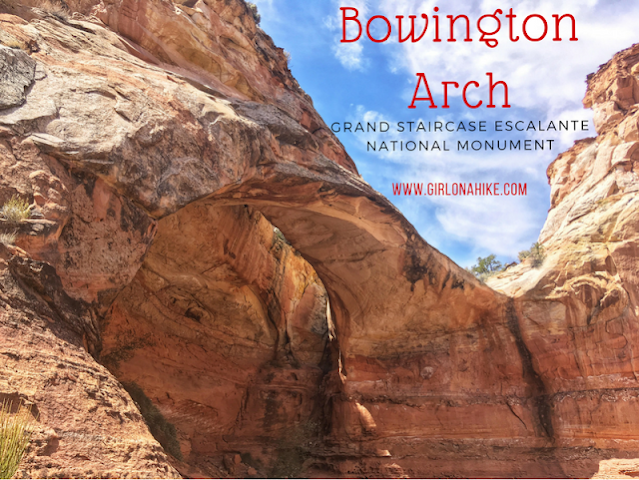 The Ultimate Guide - Dog Friendly Hikes in Escalante, Utah! Hike to Bowington Arch