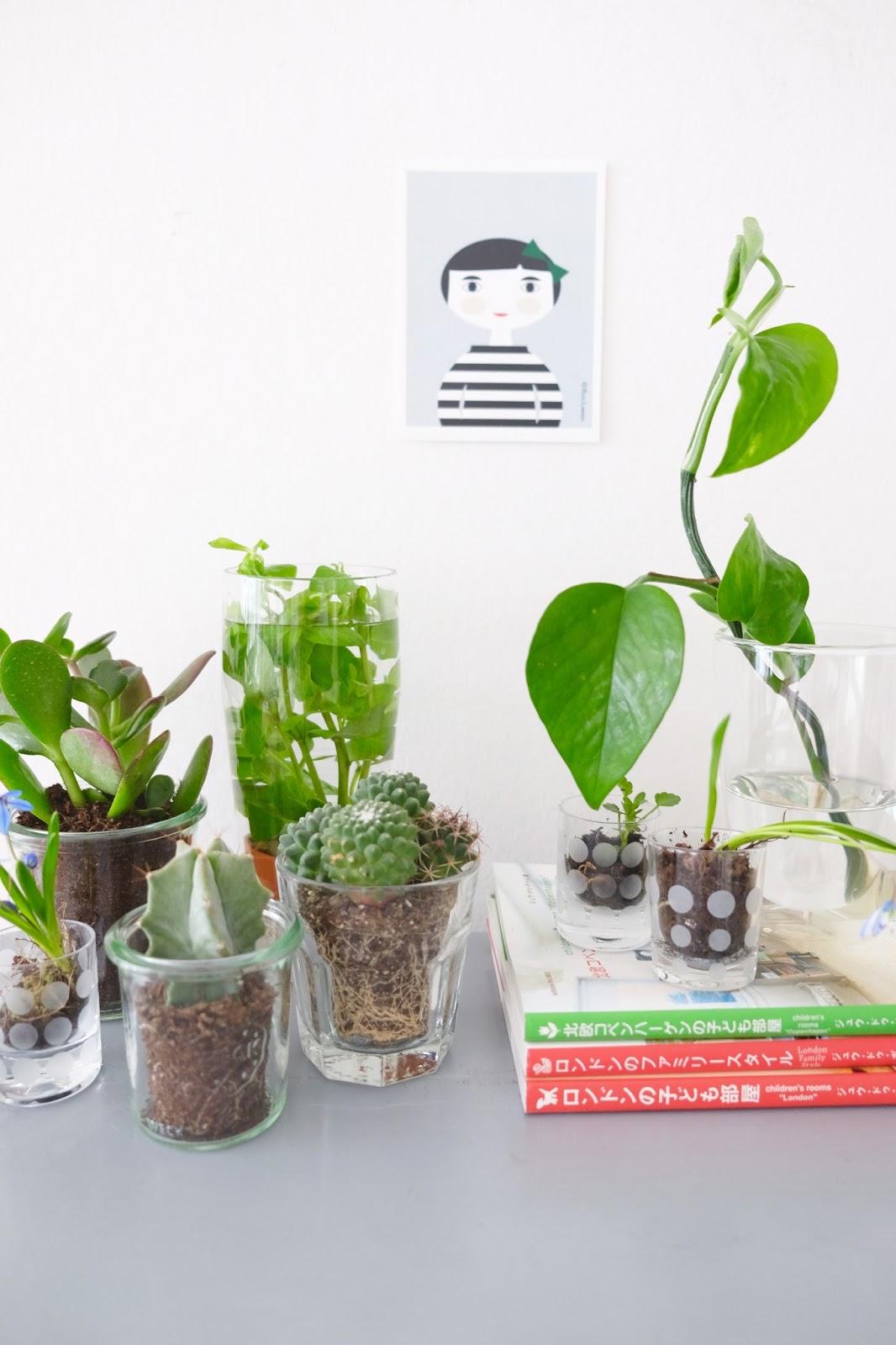 hej hanse urban jungle bloggers gr n im glas. Black Bedroom Furniture Sets. Home Design Ideas