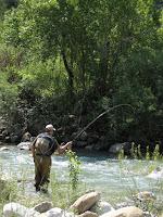 Pesca con mosca por el Pirineo