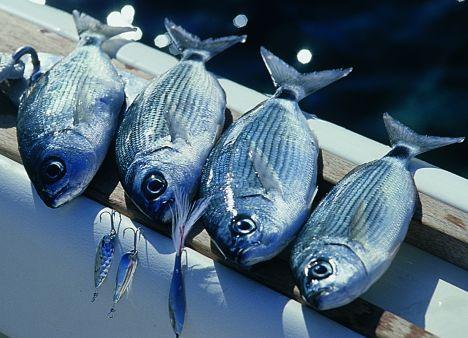 Covid, Coldiretti: allarme pesce italiano, addio a quattro barche su dieci
