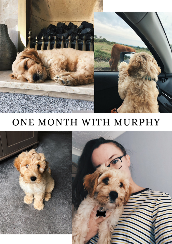 A chatty post about our 3 month old puppy and his first month living in our home.