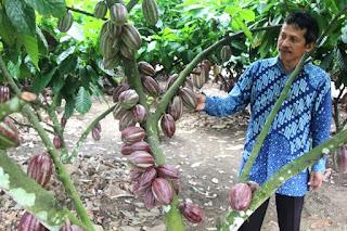 Kini usaha yang didirikan 2012 lalu ini berkembang pesat. Omset rata-rata per bulan sekitar 25 juta rupiah. Para pengrajin mampu menjual 40 hingga 70 batang kerajinan per bulannya. Harga kerajinan batang kopi mulai 350 ribu rupiah hingga 1,5 juta rupiah. Pemasaran produk ini dilakukan secara online sehingga produknya telah terjual di seluruh Indonesia, bahkan manca negara.