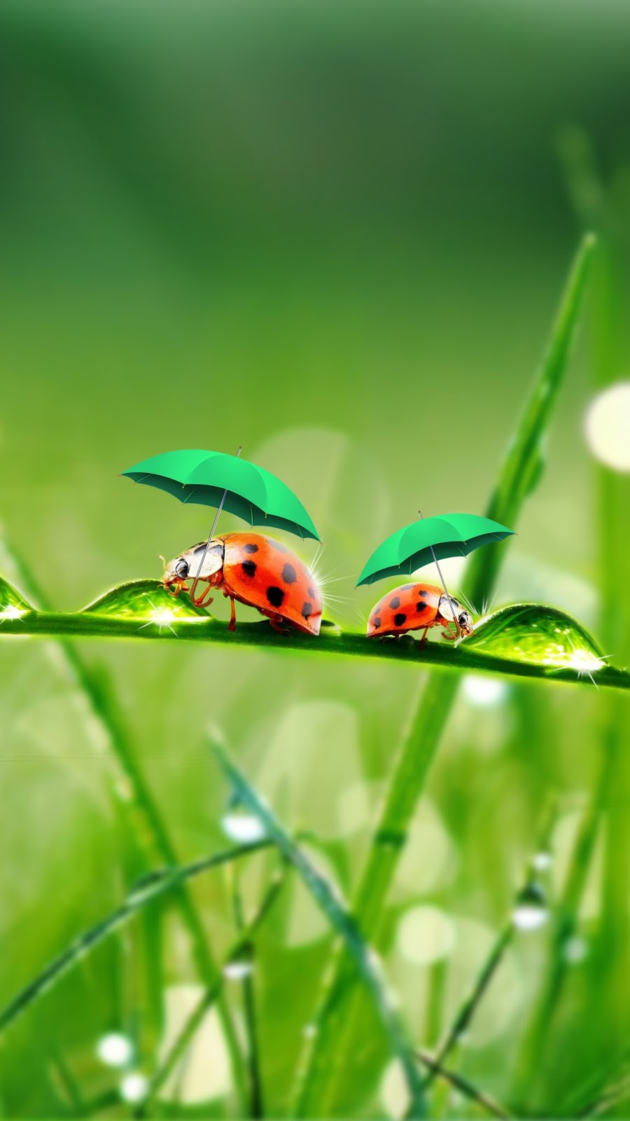 Wallpaper download j7 - Ladybug Wallpaper Samsung Galaxy J7 Click Here To Download