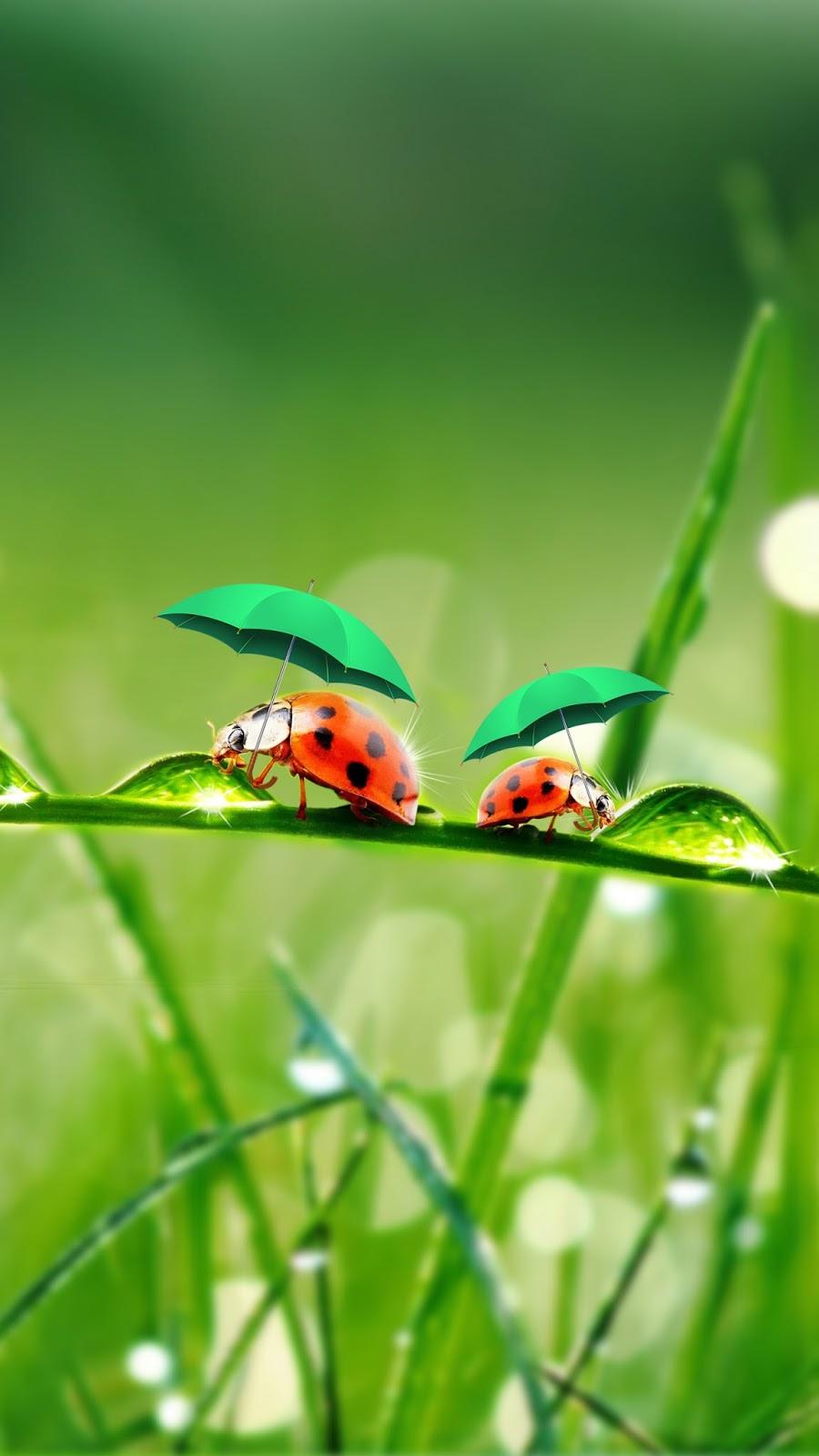 Free Wallpaper Phone: Ladybug Wallpaper Samsung Galaxy J7