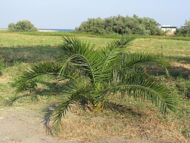 Palma in riva al mare