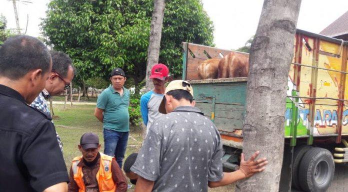 Pimpinan DPRD Kabupaten Bekasi Dikirimi 4 Ekor Sapi, Ini Kata KPK