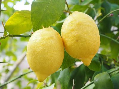 Cara menghilangkan flek hitam dengan lemon / Jus Lemon