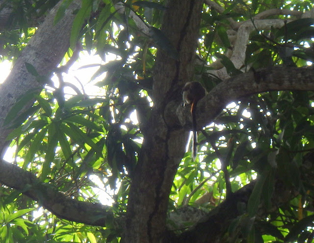 Monkeys in Tayrona National Park, Colombia