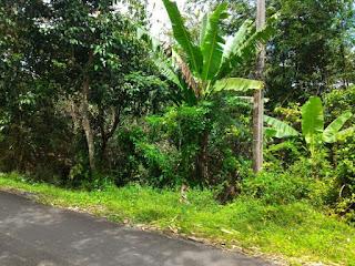 Kampung Kurma Tanjungsari, Kampoeng Kurma Tanjungsari, alamat kampung kurma, info kampung kurma