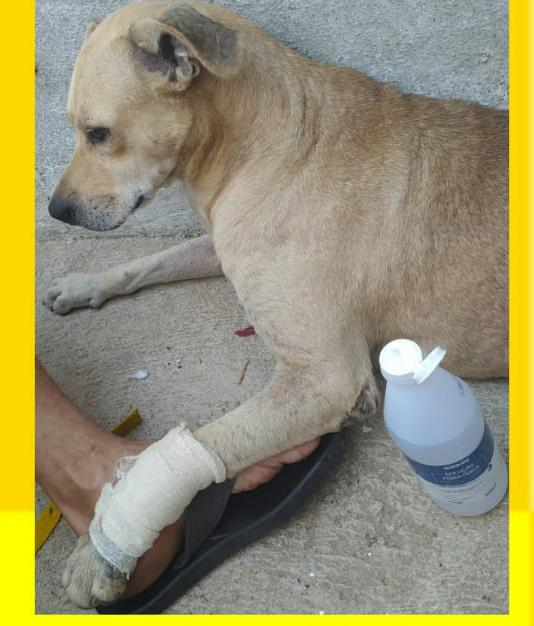 Campanha Solidária em prol de um Cachorro de Rua vítima de disparo de arma de fogo em Caraúbas