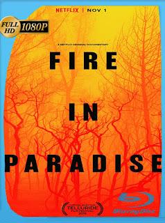 Fire in Paradise (2019) HD [1080p] Latino [Google Drive] Panchirulo