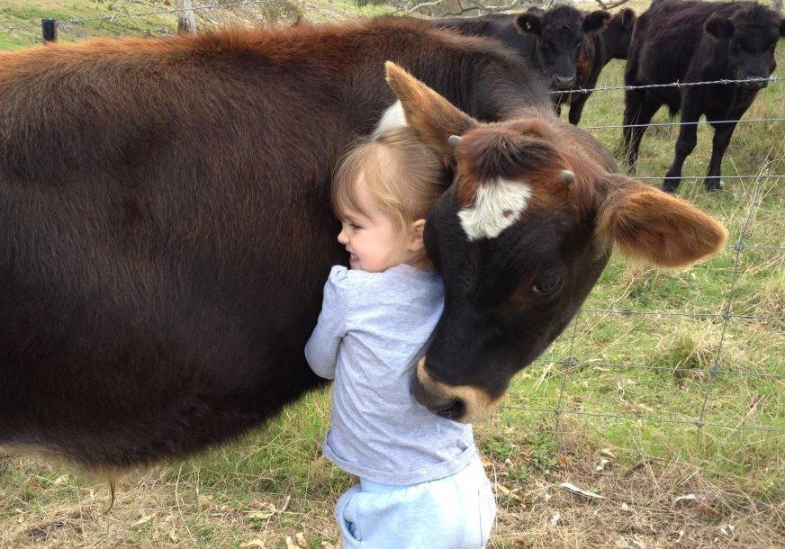 Нюта мне часто снятся коровы, интересно к чему это?