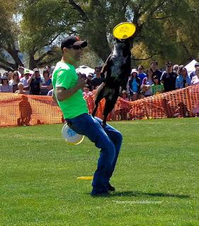Disc Dog Freestyle, Keeping Your Dog Safe