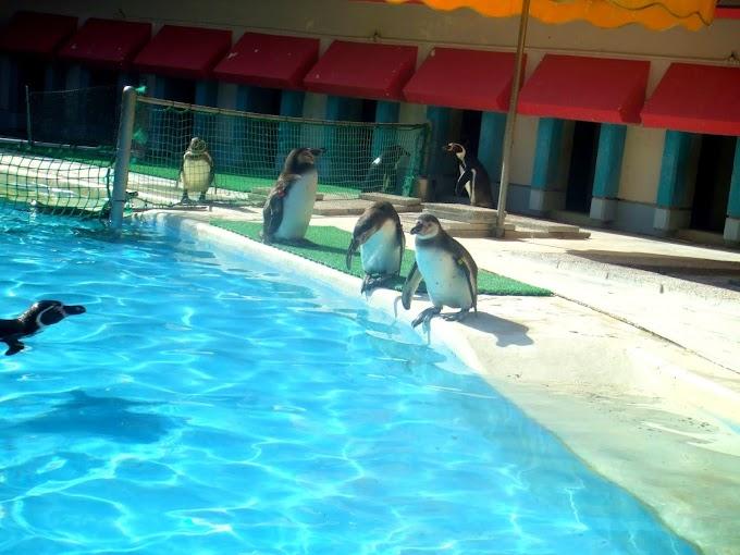 141 #ペンギン #水族館 #動物 #風景 #鳥