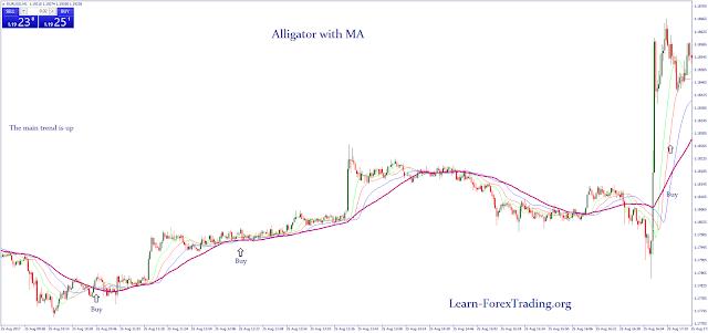 Alligator with MA strategy