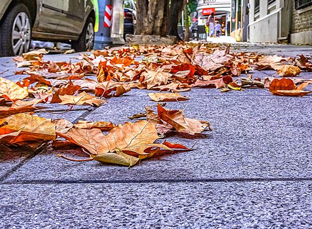 Hojas secas en el piso de la vereda.
