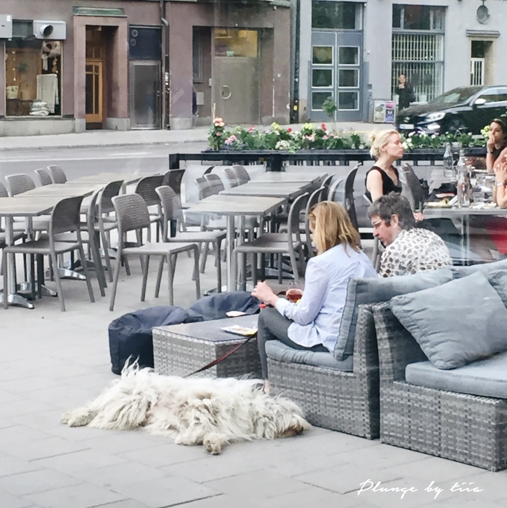 Lazy dog -Plunge by tiia - Tiia Willman - Stockholm Sweden