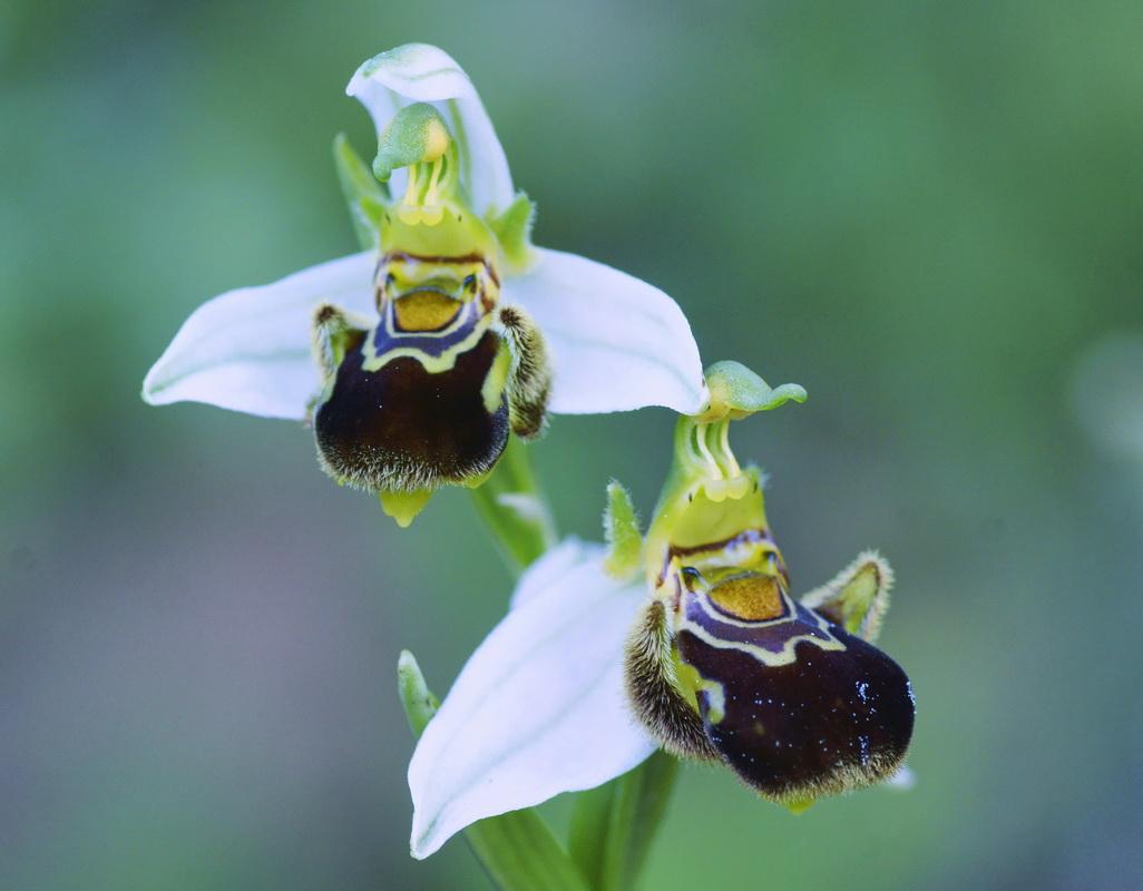 El blog de josemi. Compartiendo buenos ratos: Orquídeas II