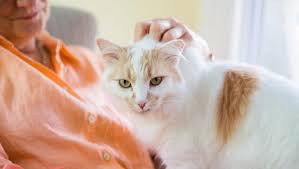 Jangka Waktu Bulu Kucing Tumbuh Yang Ideal