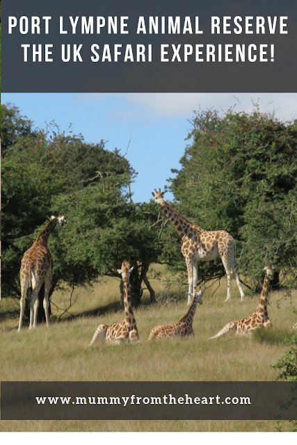 Port Lympne giraffes pin