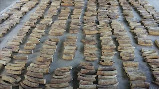 Singapore Makes Its Biggest Illegal Ivory Seizure Since 1932