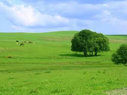O Bioma Campo